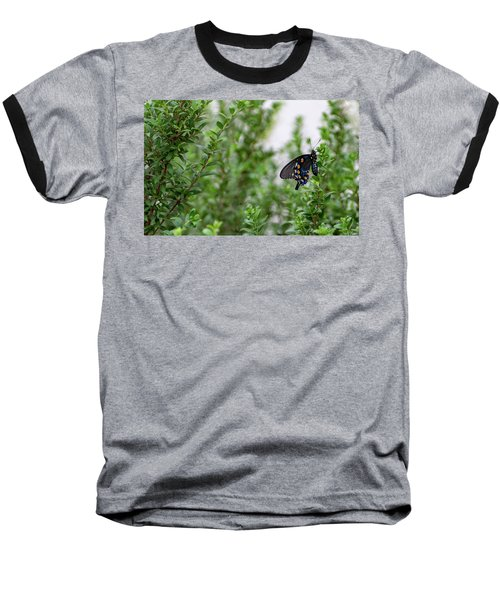 Pipevine Swallowtail Baseball T-Shirt