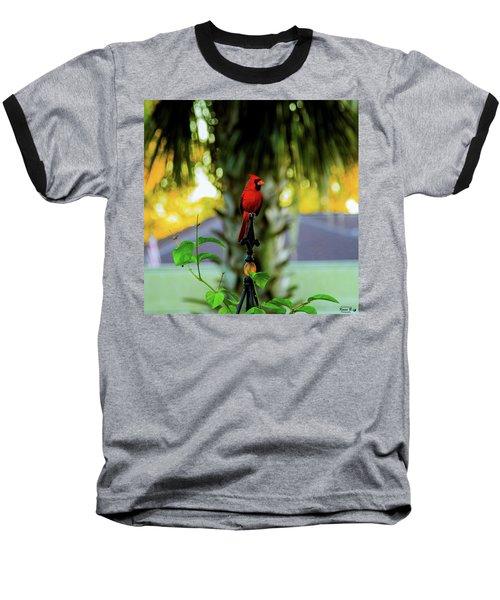 Proud Male Cardinal Baseball T-Shirt