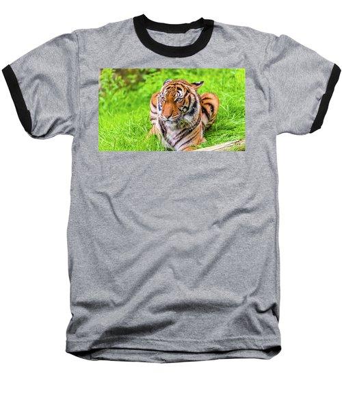 Ready To Pounce Baseball T-Shirt