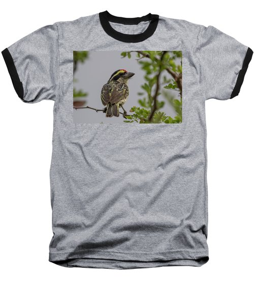 Red-fronted Barbet Baseball T-Shirt