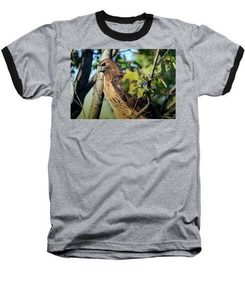 Red-tailed Hawk Looking Down From Tree Baseball T-Shirt