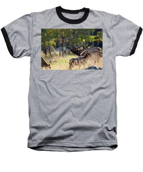 Rocky Mountain Bull Elk Bugeling Baseball T-Shirt