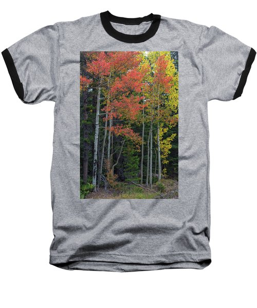 Baseball T-Shirt featuring the photograph Rocky Mountain Forest Reds by James BO Insogna