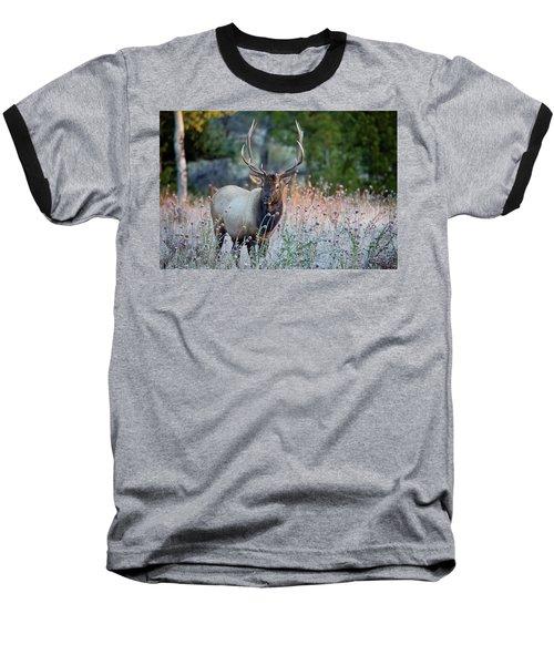 Rocky Mountain Wildlife Bull Elk Sunrise Baseball T-Shirt