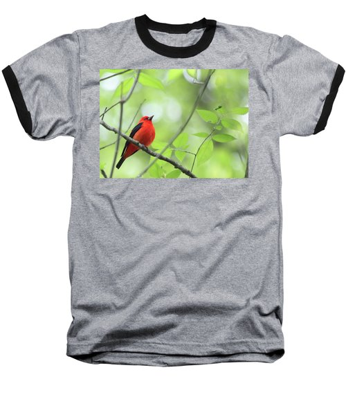 Scarlet Tanager Baseball T-Shirt