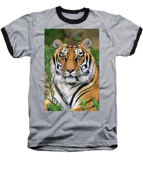 Siberian Tiger Staring Endangered Species Wildlife Rescue Baseball T-Shirt