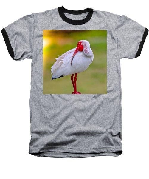 Sleepy Ibis Baseball T-Shirt
