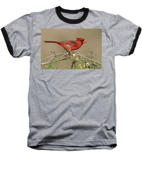South Texas Cardinal Baseball T-Shirt