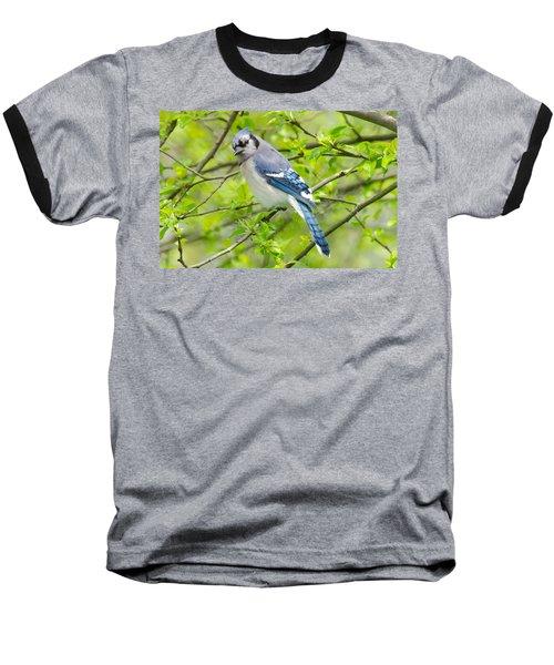 Springtime Bluejay Baseball T-Shirt