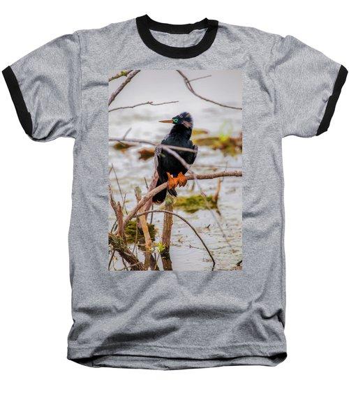 Stunning Anhinga Baseball T-Shirt