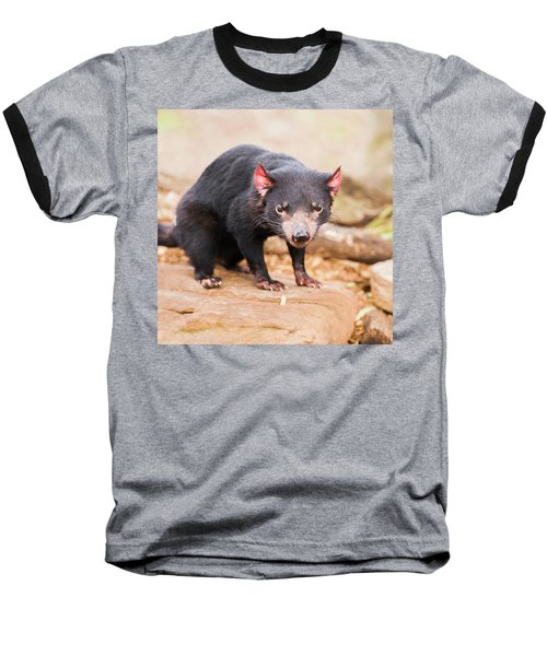 Tasmanian Devil In Hobart, Tasmania Baseball T-Shirt
