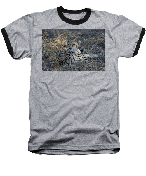 Cheetah In Repose Baseball T-Shirt