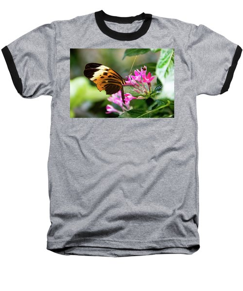 Tiger Longwing Butterfly Drinking Nectar  Baseball T-Shirt