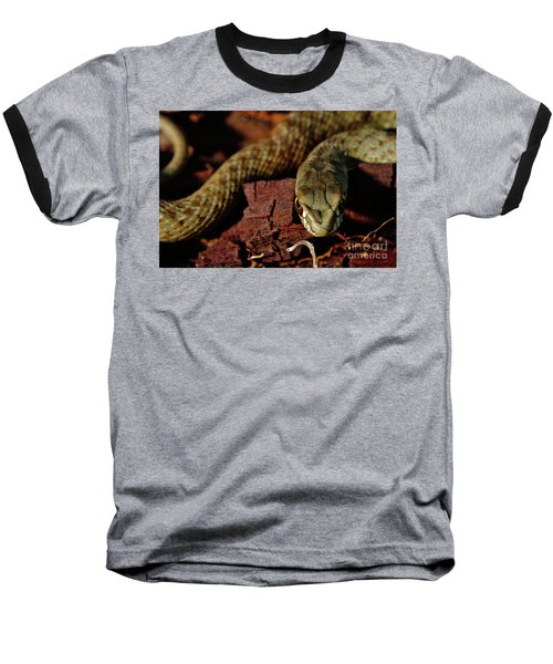 Wild Snake Malpolon Monspessulanus In A Tree Trunk Baseball T-Shirt
