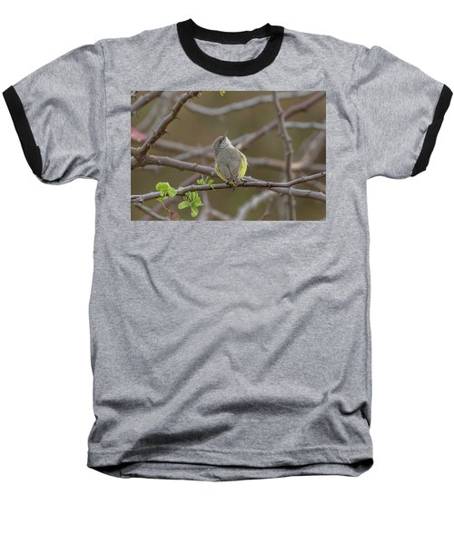 Yellow-bellied Eremomela Baseball T-Shirt
