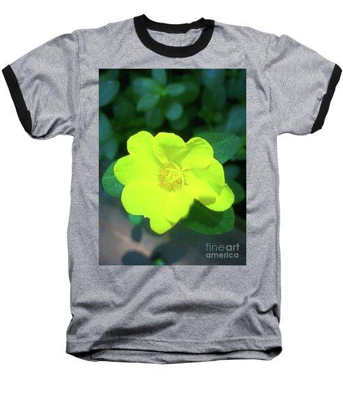 Yellow Hypericum - St Johns Wort Baseball T-Shirt