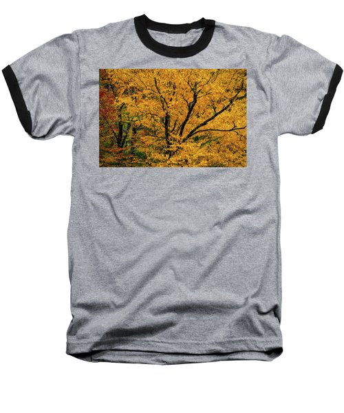 Yellow Tree Leaf Brilliance  Baseball T-Shirt