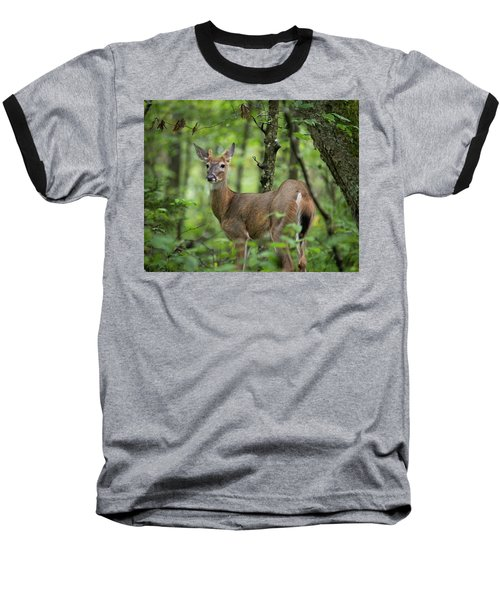 Young White-tailed Deer, Odocoileus Virginianus, With Velvet Antlers Baseball T-Shirt