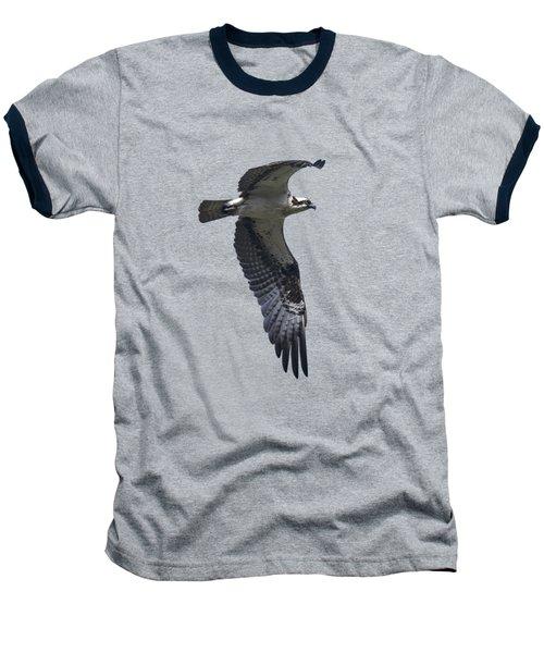Osprey In Flight 2 Baseball T-Shirt by Priscilla Burgers