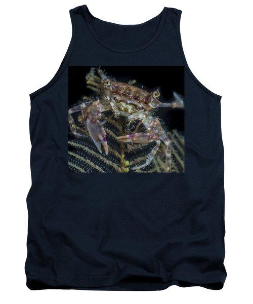 Crab Staring At You Tank Top