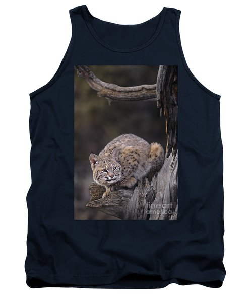 Tank Top featuring the photograph Crouching Bobcat Montana Wildlife by Dave Welling