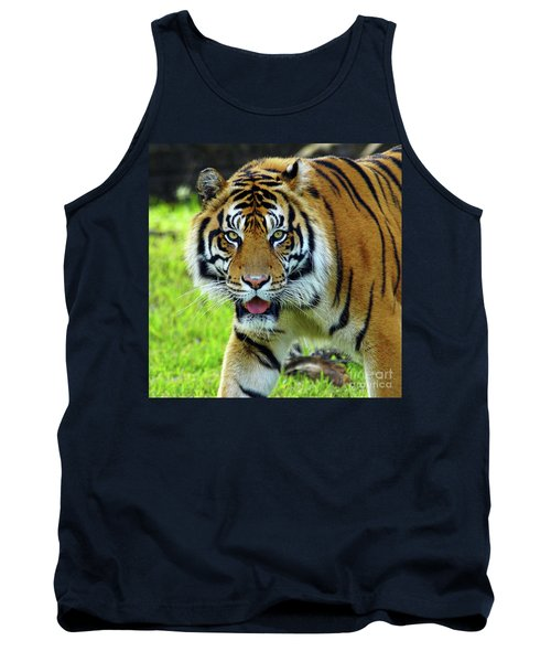 Tiger The Stare Tank Top by Larry Nieland
