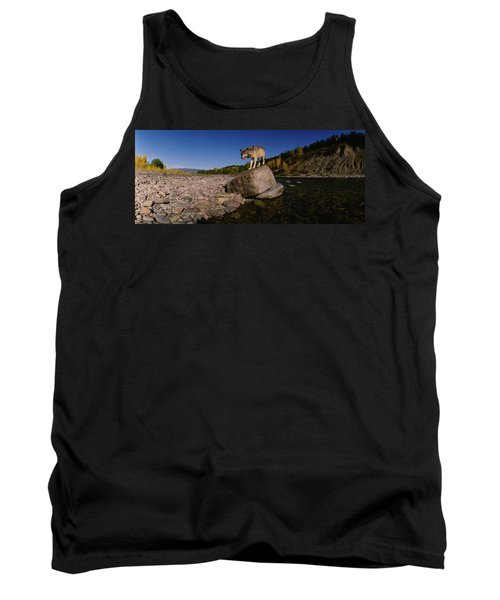 Gray Wolf Standing On A Rock Tank Top