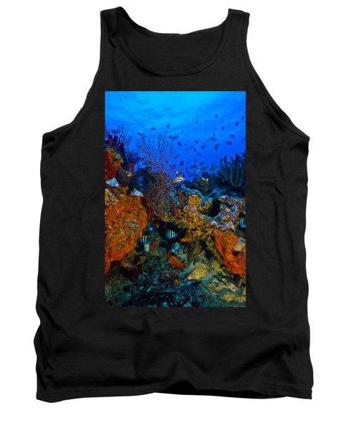 Lynns Reef Tank Top