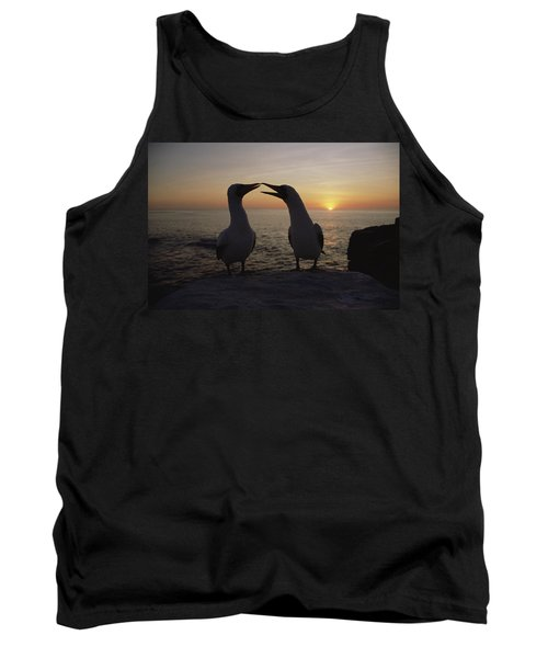 Masked Booby Couple Courting Galapagos Tank Top by Konrad Wothe