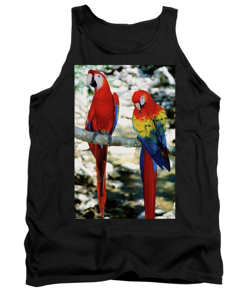 Pair Of Scarlet Macaws On Branch Tank Top