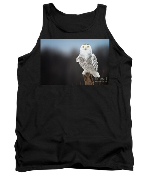 Snowy Owl Pictures 13 Tank Top