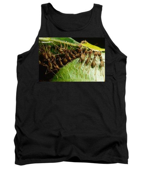 Weaver Ant Group Binding Leaves Tank Top