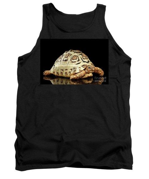 Closeup Leopard Tortoise Albino,stigmochelys Pardalis Turtle With White Shell On Isolated Black Back Tank Top