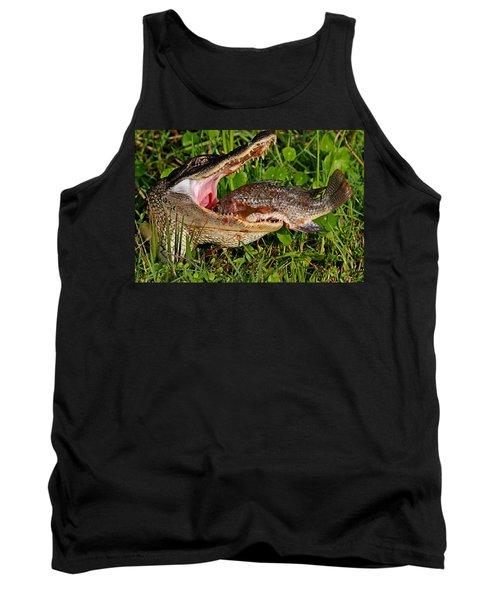 Alligator Eating Fish Tank Top