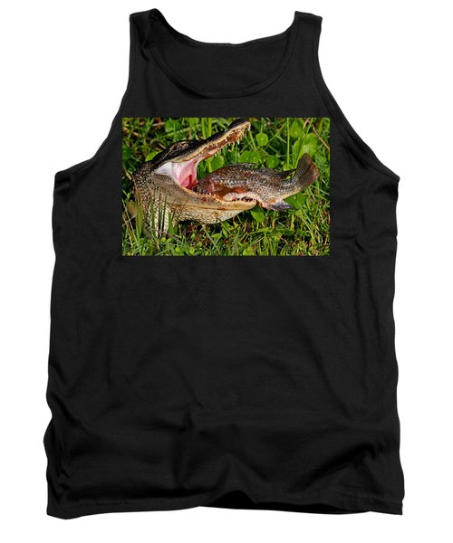 Alligator Eating Fish Tank Top