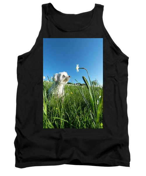 Blooming Daffodils In The Antola Park With Maltese IIi Tank Top