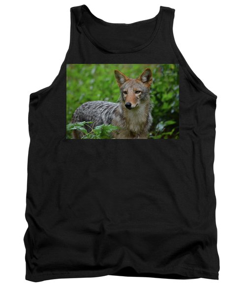 Coyote On The Prowl  Tank Top