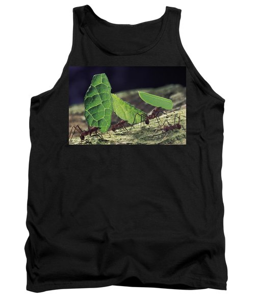 Leafcutter Ant Atta Cephalotes Workers Tank Top by Mark Moffett