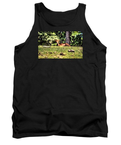 Stag In The Woods Tank Top by James Potts