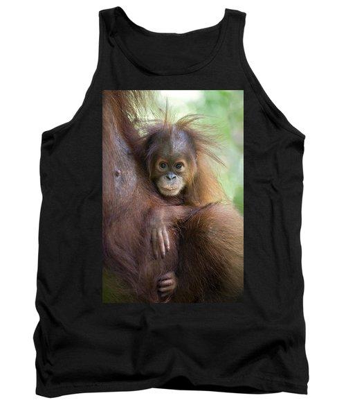 Sumatran Orangutan 9 Month Old Baby Tank Top