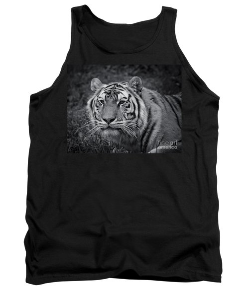 Tiger In The Grass Tank Top by Darcy Michaelchuk