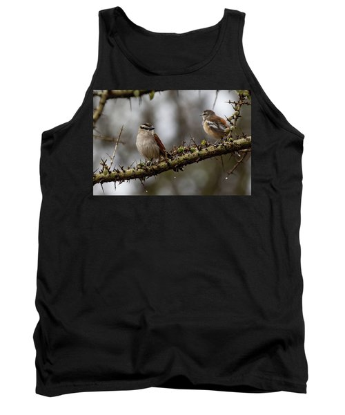 Black-crowned Tchagra And White-browed Scrub-robin Tank Top