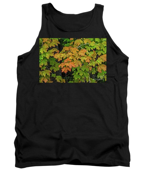 Various Stages Of Fall Color On Maple Leaves Tank Top