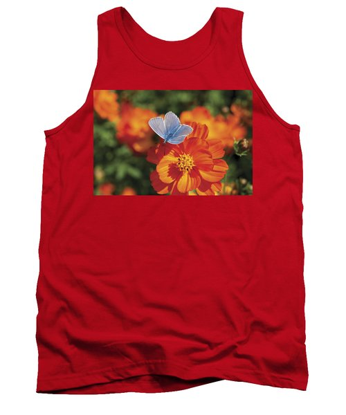 Common Blue Butterfly Tank Top by Lana Enderle