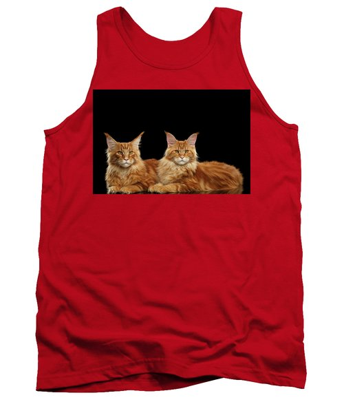 Two Ginger Maine Coon Cat On Black Tank Top