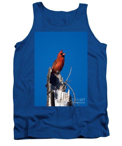 Cardinal On Honeymoon Island Tank Top