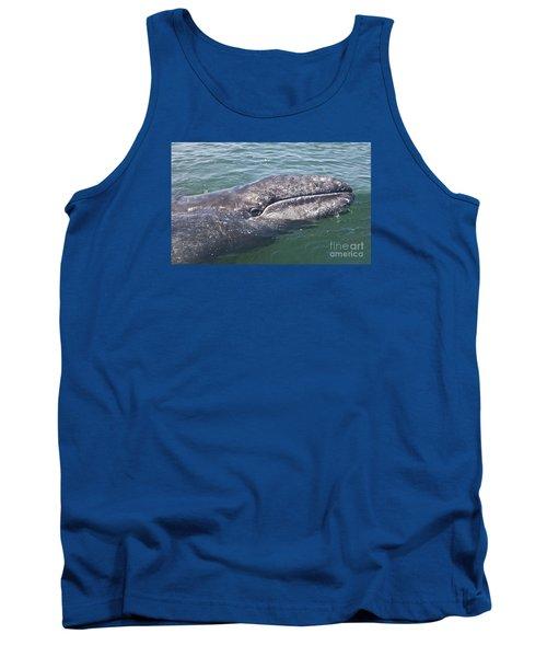 Gray / Grey Whale Eschrichtius Robustus Tank Top by Liz Leyden