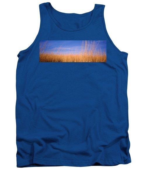 Prairie Grass, Blue Sky, Marion County Tank Top