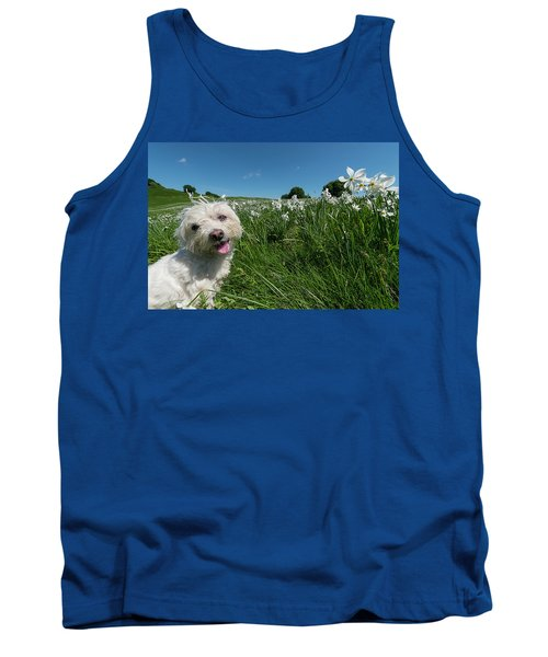 Blooming Daffodils In The Antola Park With Maltese II Tank Top