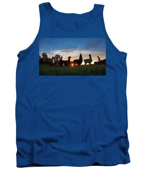 Llamas At Sunset Tank Top